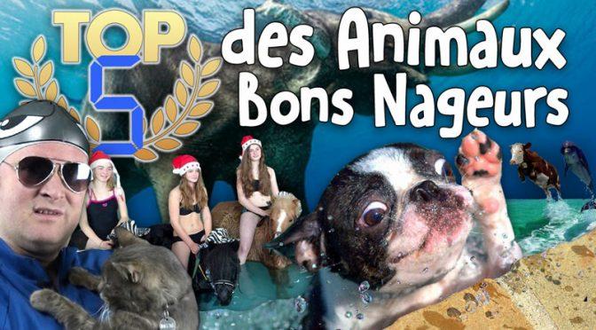 TOP 5 des Animaux Bons Nageurs